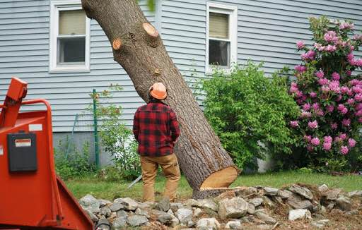 Picture of our crew member watching a tree fall from a tree cutting in Roswell, GA